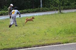 平成26年度青森県警察嘱託警察犬審査会で5頭が合格しました(青森市)。
