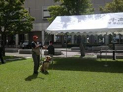 生涯学習フェア2011で、東日本大震災での活動写真展示と警察犬のデモンストレーションを行いました(青森県総合社会教育センター)。