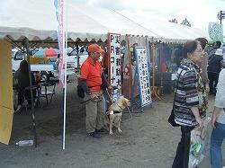 青森市合浦公園の秋祭りで災害救助犬・捜索犬のパネル展示、犬とのふれあい、募金活動を行いました。