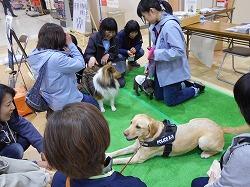 アメニティタウン「ピアドゥ」で災害救助犬・嘱託警察犬・セラピー犬が広報活動と募金活動を行いました(八戸市)。