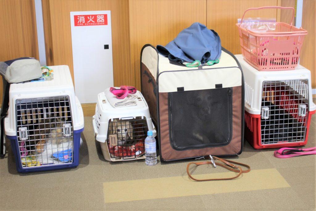 「ひかりの岬こどもデイサービスセンター」の子供たちとセラピー犬がふれあいを行いました(青森市浪岡)