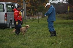 青森市内で開催の青森県嘱託警察犬競技大会に参加しました。