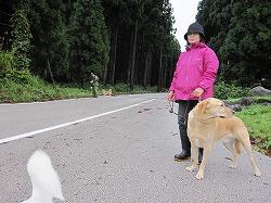 災害救助犬ネットワーク主催の認定審査会に出場しました(富山県)。