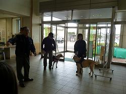 青森南警察署で、捜索犬のデモンストレーションを行いました。